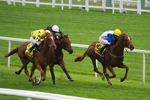 horse racing is difficult to predict